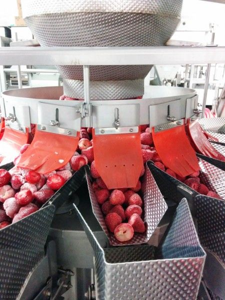 Frozen strawberries ready for packaging