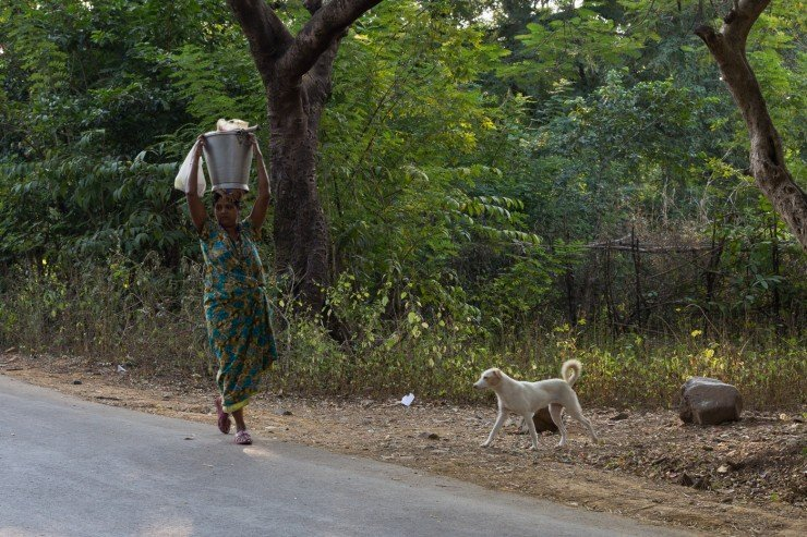 A woman and some street dogs in Sanjay Gandhi National Park